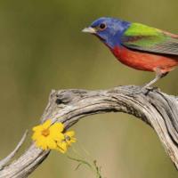 深度学习重新发现一度被认为灭绝的鸟类