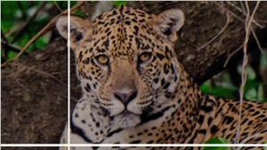 GPU 和深度学习如何帮助保护濒危物种