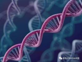 探索基因的秘密:初创公司借助GPU加快DNA分析速度