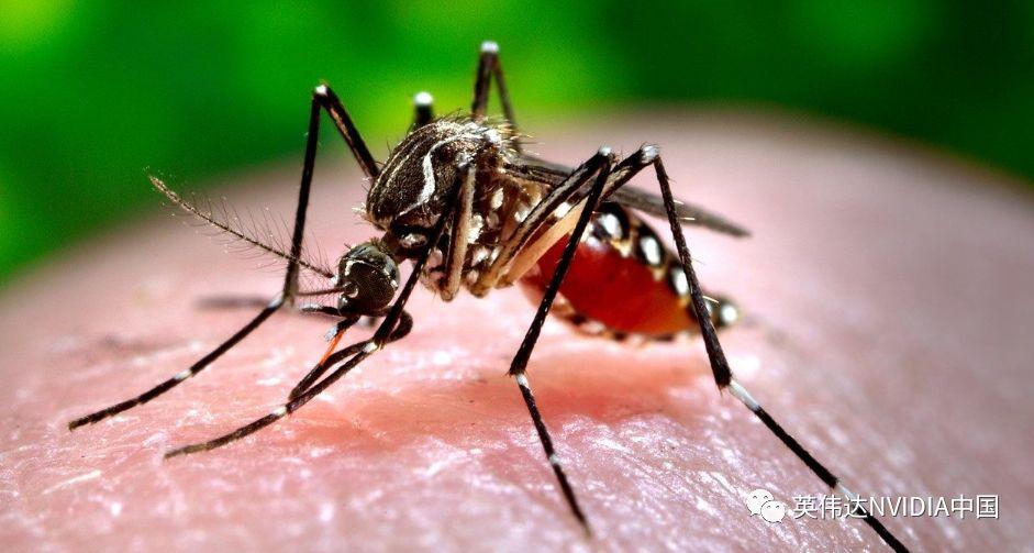 波多黎各初创公司利用深度学习方案打响蚊媒疾病反击战