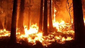 人工智能如何保护森林免遭毁坏