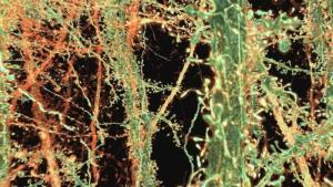 诺贝尔奖得主通过NVIDIA GPU看到生物学的未来