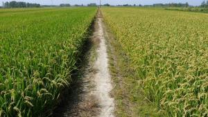 """识农智能基于GPU打造""""农业+AI""""应用,解决农作物""""看病难"""
