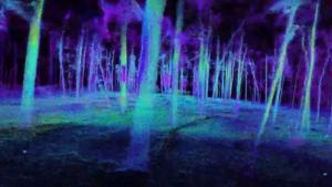 走进森林 | NVIDIA初创加速计划会员赋能林业工作