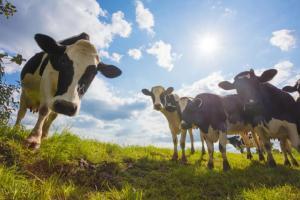 苏格兰农业学院运用AI检测奶牛是否感染牛结核病